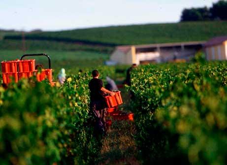 Clube do Vinho Vinícola 5